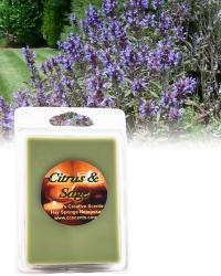 Citrus Sage 6 pack